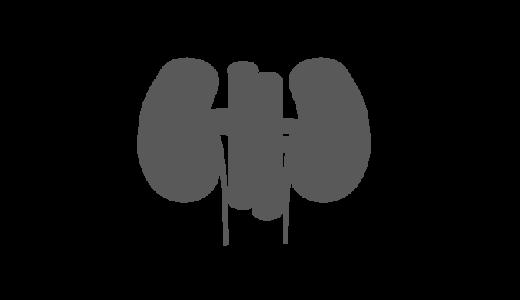 腎臓のシルエットのイラスト
